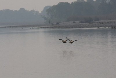 Birds flying above the river