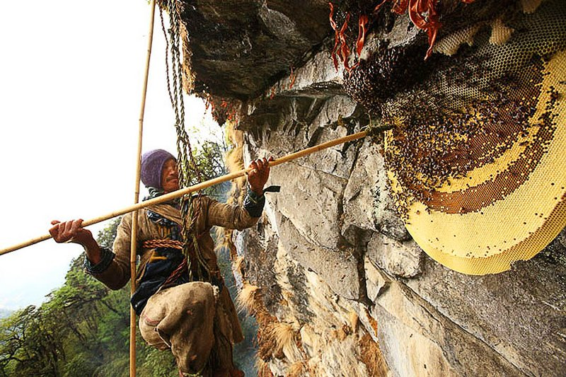 honey hunting