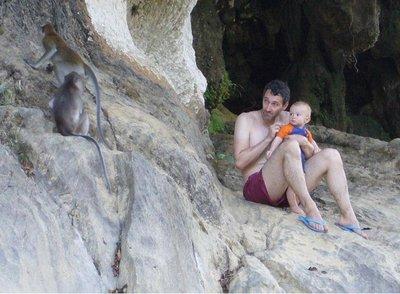 Affen im Engpass