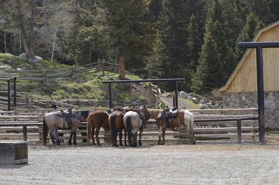 some of the horses at the ranch