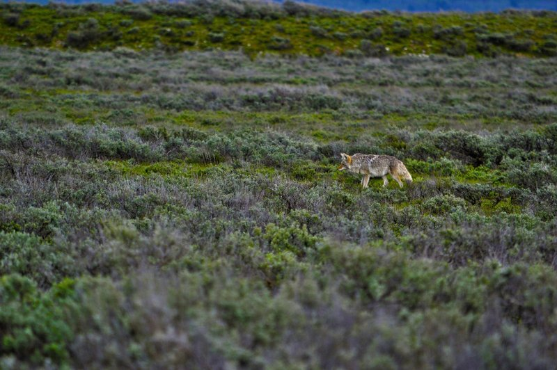 large_Wolf4.jpg