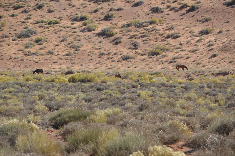 wild horses located all over Monument Valley