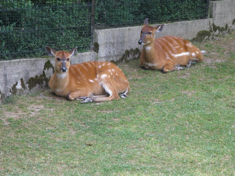 2 gazelle-type things