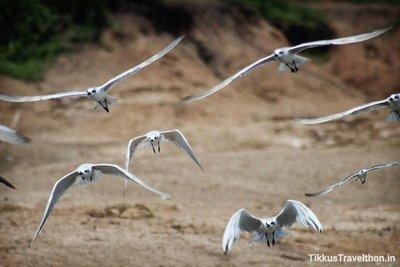 i_bird_4.jpg