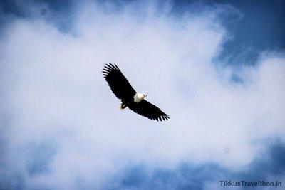 i_eagle.jpg