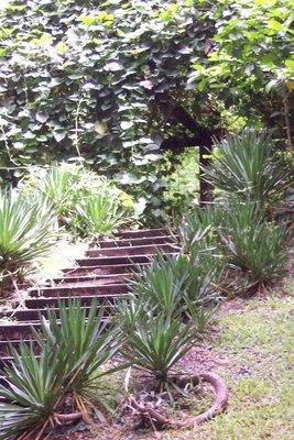 Steps and yukka