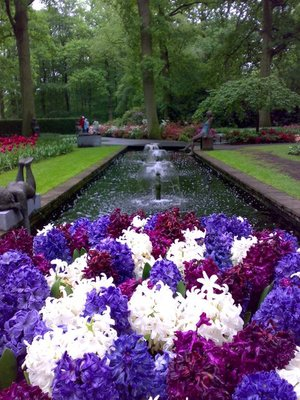 Hyacinths and fountains