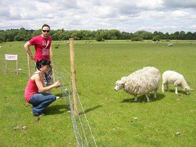 Feeding the baa baas