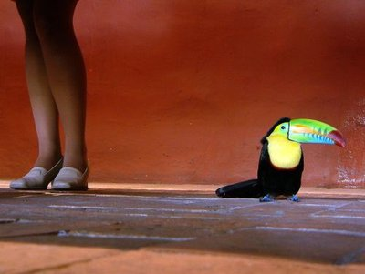Cartagena: Toucan and Legs