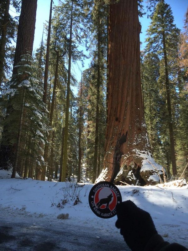 Sequoia_national_parkp5