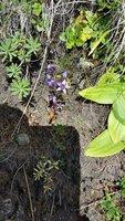 90_20160913_Alpine_Flower_2.jpg