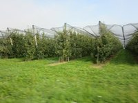 IMG_Apple_Orchards.jpg