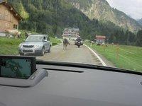IMG_Cows_vs_Bikes.jpg