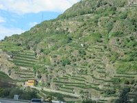IMG_Hillside_vines.jpg