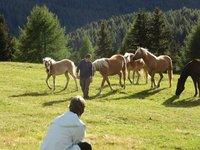 IMG_Phil_Horse_Whisperer.jpg