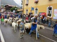 IMG_Sheep_n_Goats.jpg
