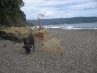 20100118_N..beach_1.jpg