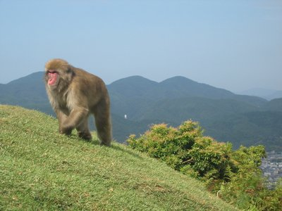 Monkey Mountain
