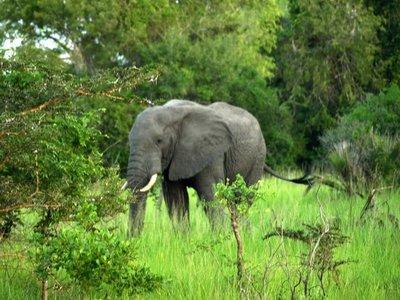 Saadani National Park, Tanzania