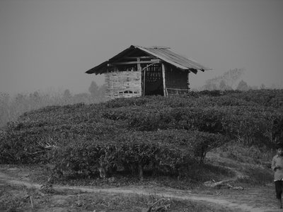 Hut in Tea Garden