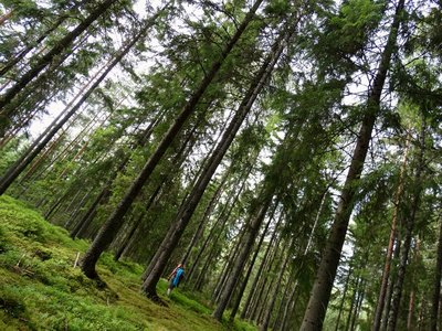 Sweden - Forest Adventures