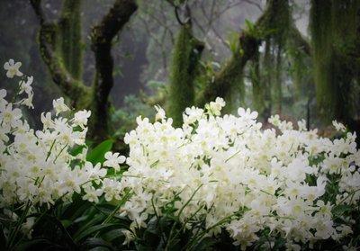 Orchid garden, Singapore botanic gardens