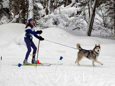 Attempting_Skijoring.jpg