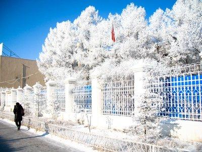 Frozen_trees.jpg