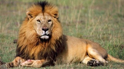 The_king.jpg