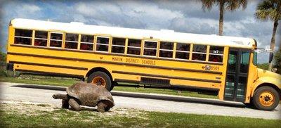 stopping_t..he_tortoise.jpg