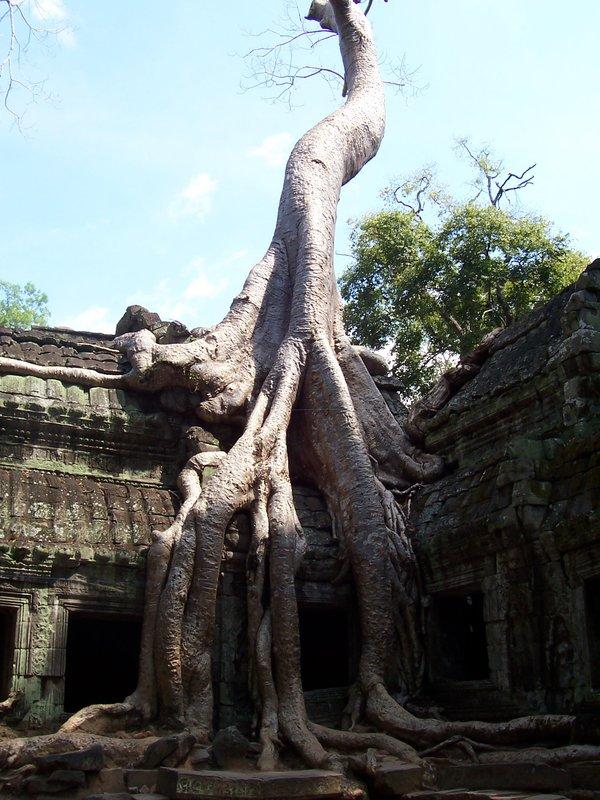 Jungle Temple - Ta Prohm