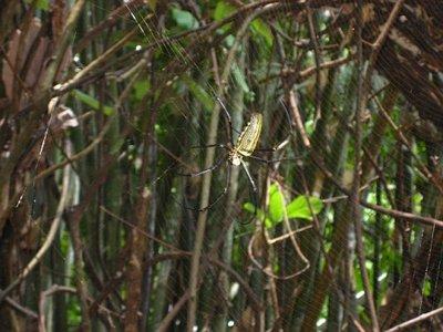 My pretty spider