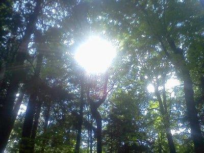 Hartwick Pines State Park (Grayling, MI)