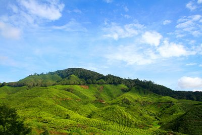 Cameron Highland