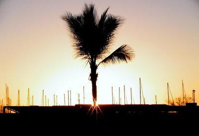 Shimmering Palm