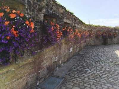 Flowers on the walls in Concarnea