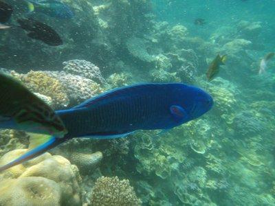 pretty_blue_fish.jpg