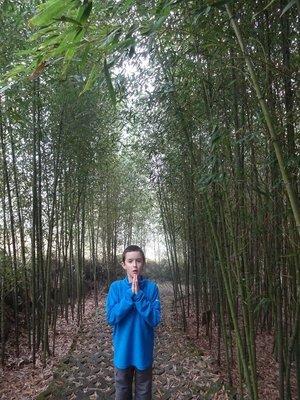 Bamboo Arboretum