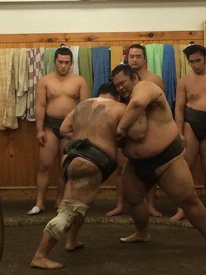 Arashio Sumo Stable morning practice, Tokyo