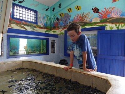 Baby Sea Turtles, Turtle Rehab Centre