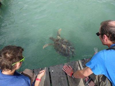 Feeding Sea Turtles, Turtle Rehab Centre