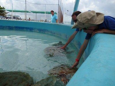 Sea Turtles, Isla Mujeres