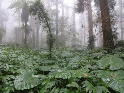 Deeper into the misty forest