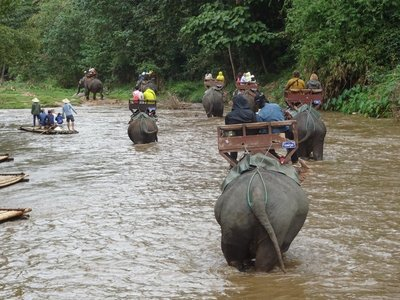 Crossing the river on elephants