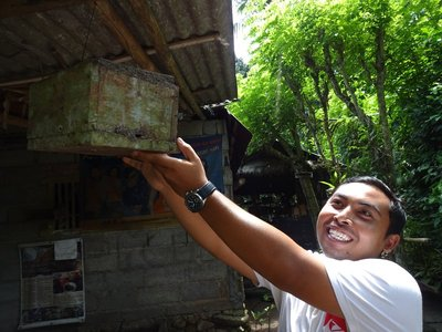 Honey Farmer of the world's smallest bees, Tenganan