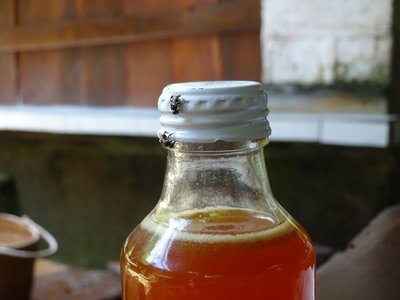 Mosquito bees on the bottle of honey they produce - it tastes of mango and is fantastic in tea