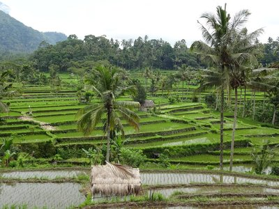 Rice terraces near Sideman