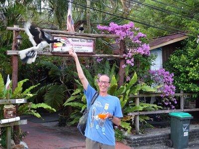 Feeding wild hornbills, Pulau Pangkor