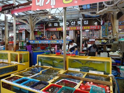 Fish Shop Alley, Sokcho
