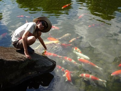 Getting friendly with the carp, Koko-en Garden